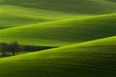Moravian Tuscany landscape. Fields and meadows in South Morava, Czech republic. Wavy country scenery at sunset.