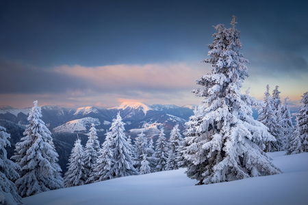 Winter sunset in Slovakia. Velka Fatra mountains under snow. Frozen snowy trees and dark sky panorama. Stok Fotoğraf