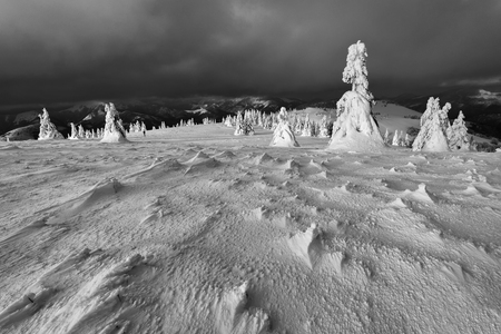 Winter windy in Slovakia. Velka Fatra mountains under snow. Frozen snowy trees and dark sky panorama.