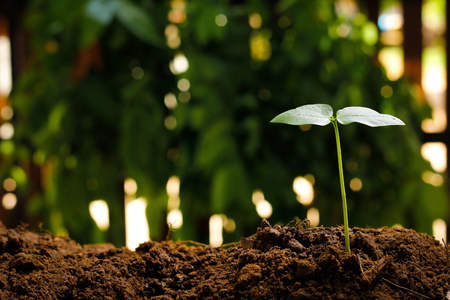concep: Young plant on nature background