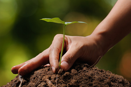 forestation: Hands of farmer growing and nurturing tree growing on fertile soil with green and yellow bokeh background  nurturing baby plant  protect nature Stock Photo