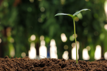 forestation: Young plant on nature background