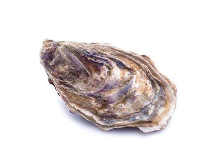 Verse oester op witte achtergrond