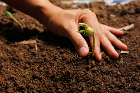 concep: Hands of farmer growing and nurturing tree growing on fertile soil with green and yellow bokeh background  nurturing baby plant  protect nature Stock Photo