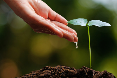 csr: Farmers hand watering a young plant