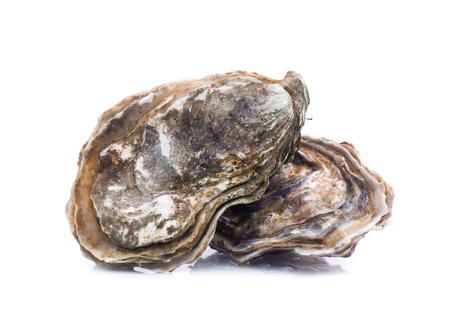Fresh  oyster on white background 版權商用圖片 - 92350770