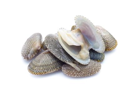 Clam shells isoalted