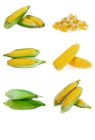 Corn collection isolated on white Banco de Imagens