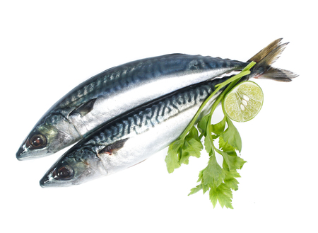 Fresh saba fish isolated on white background