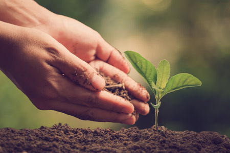Hands of farmer growing and nurturing tree growing on fertile soil with green and yellow bokeh background  nurturing baby plant