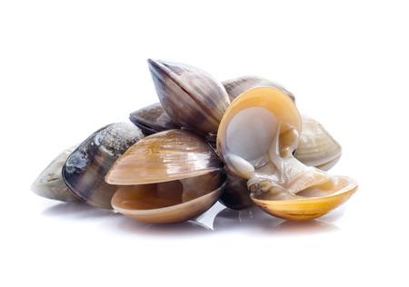 enamel venus shell on a white background Zdjęcie Seryjne