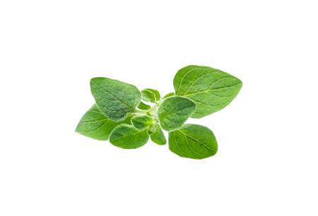 Oregano or marjoram leaves isolated on white background Zdjęcie Seryjne