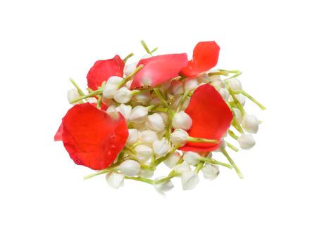Thai Garland jasmine isolated on white background