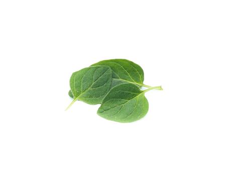 Oregano or marjoram leaves isolated on white background Stock Photo