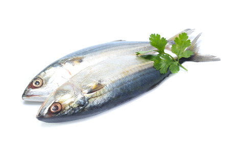Fresh mackerel isolated on white background