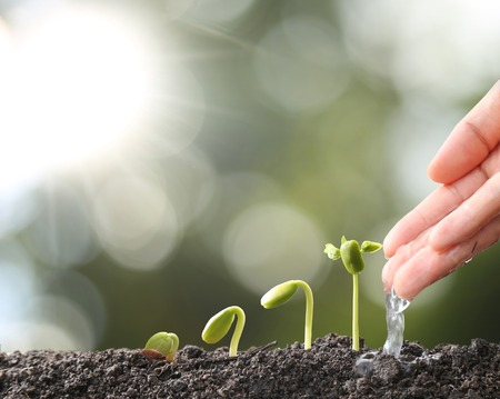 Agriculture. Growing plants. Plant seedling. Hand nurturing and watering young baby plants growing in germination sequence on fertile soil with natural green bokeh background