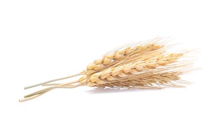 Espiga de arroz de cebada sobre fondo blanco.
