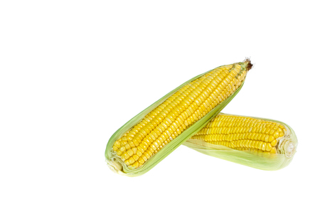 An ear of corn isolated on a white