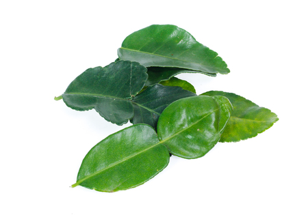 Bergamot leaf isolated on white, kaffir lime leaf