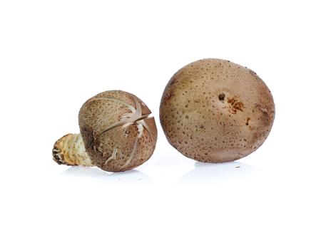 Shiitake mushroom on the White
