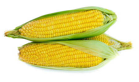 Corn on white 版權商用圖片