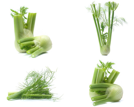 Fresh, organic fennel on a white Stok Fotoğraf