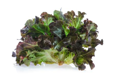 Fresh lettuce leaves isolated on white Reklamní fotografie