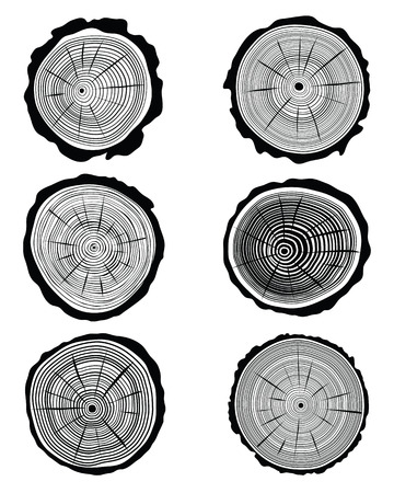 Vector illustration of cross section of the trunk Vector