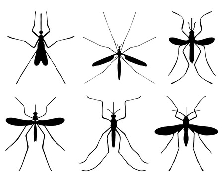 extreme close up: Black silhouettes of mosquito, vector Illustration