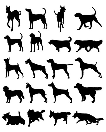 husky puppy: Silhouettes of different breeds of dogs, vector
