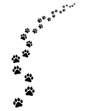 Voetafdrukken van kat