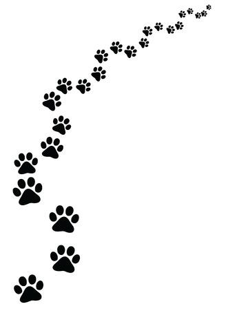 Footprints of cat