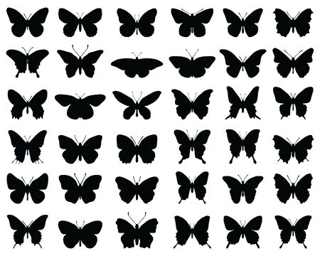Silhouettes of butterflies on a white background