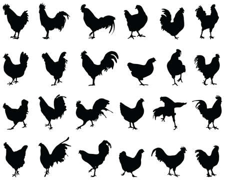 Black silhouettes of roosters and hens on a white background