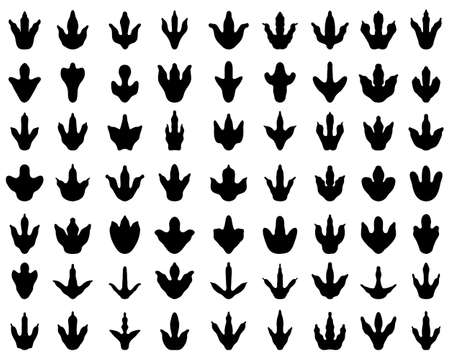 Black footprints of dinosaurs on white background
