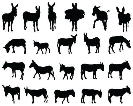 Black silhouettes of donkeys on white background Ilustracja