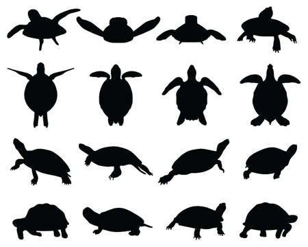 Black silhouettes of turtles on a white background