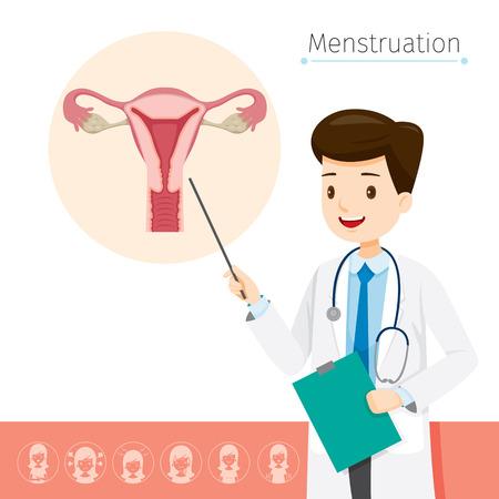 의사는 생리, 여성, 내부 장기, 신체, 신체, 해부학, 건강에 대한 원인에 대해 설명합니다. 일러스트