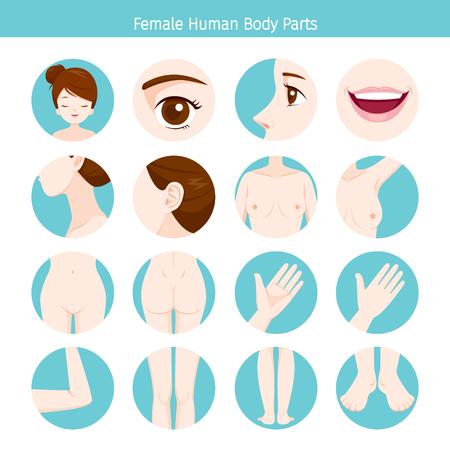 Female Human External Organs Body Set, Physiology, Structure, Medical Profession, Morphology, Healthy Vektoros illusztráció