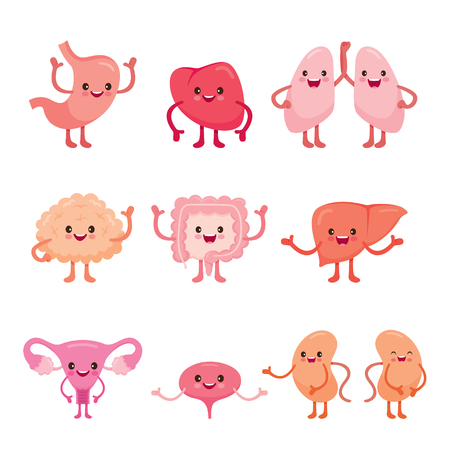 Human Internal Organs, Cartoon Characters Set, Physiology, Structure, Medical Profession, Morphology, Healthy 矢量图像