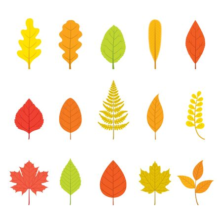 Set Of Colorful Leaves With Different Shapes, Nature, Season, Plant Stock Illustratie