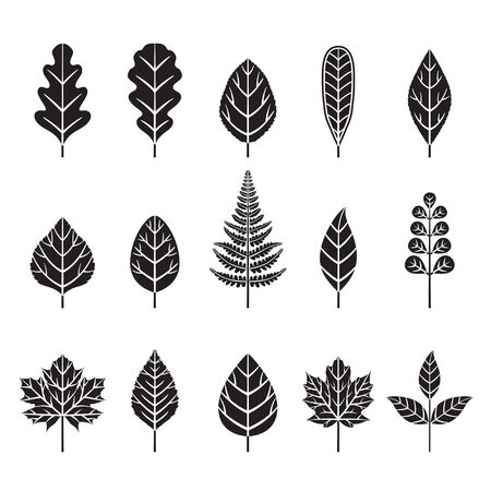 Set Of Monochrome Leaves With Different Shapes, Nature, Season, Plant
