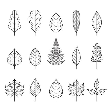 Set Of Outline Leaves With Different Shapes, Nature, Season, Plant