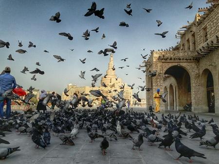 souq: Birds at Souq Waqif, Doha,Qatar