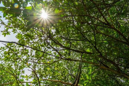 Looking up green forest. tropical forest with vivid green rich and lush foliage . bottom view background. sunstars across the branches
