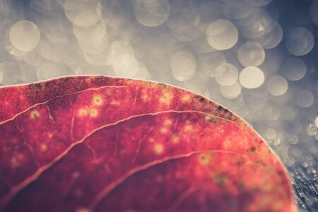 isolated red leaf on a grey background with amazing bokeh light. autumnal concept.
