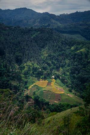 Landscape in the mountains. Little Adam's peak, Ella, Sri Lanka with tea plantation. portrait format