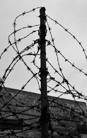no boundaries: barbed wire tangle