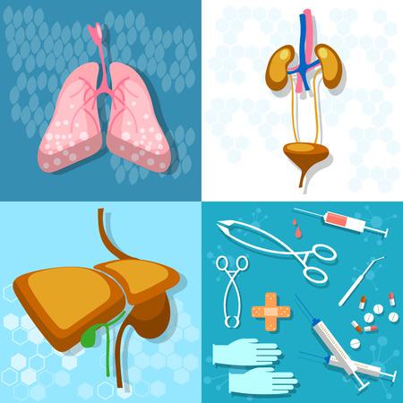 Medicine: human anatomy, examination transpatologiya, lungs, liver, kidneys, syringes, tablets, treatment, vector illustration