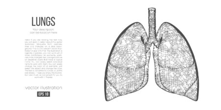 Abstract silhouette of the polygonal organ of lungs on white background. Scanning, research and diagnosis of the human lungs. Holographic low poly, wireframe vector. Thanks for watching
